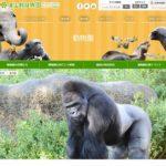 シャバーニの年齢が気になる!東山動物園の人気ゴリラのグッズも凄い